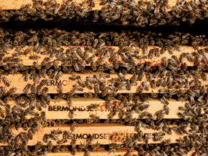 Beekeeping Tower Hamlets Dale Gibson George V Pontoon Dock East London Docklands